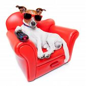 pic of home theater  - dog watching tv or a movie sitting on a red sofa or couch with remote control changing the channels - JPG