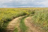 A ground road in a field with high grass in Krasnoyarsk area in Russia
