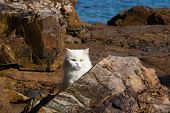 Adorably Cute White Tabby Persian Ragdoll Cat Sitting Relaxed On The Beach