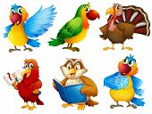 Illustration of the colourful feathered creatures on a white background