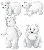 Illustration of the four white polar bears on a white background
