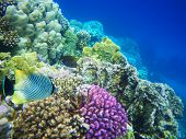 picture of coral reefs  - Underwater photo of  hard - JPG