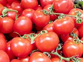 Tel Aviv Red Tomatoes On Bazaar 2013