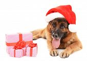 Funny cute dog in Christmas hat with gifts isolated on white