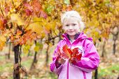 little girl in autumnal vineyard