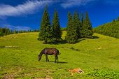 Mare And Foal Grazing In A Sunny Green Meadow