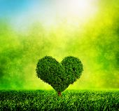 Heart shaped tree growing on green grass. Love, nature, environment. Sunny morning light with sparkle and glitter. HD quality