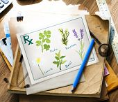 Rx Herb Cilantro Rosemary Camomile Basil Lavender Concept