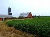Abandoned Dairy Farm with Crop of Soybeans
