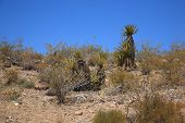 picture of southwest  - A desert landscape with plants from the American Southwest - JPG
