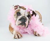 It's No Bull, I'm Beautiful!