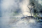 Tree In Steam
