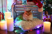 Red cat on pillow no wooden floor and Christmas decoration background