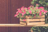 Pink Petunia In Pot On Wood Table With Vintage Effect.