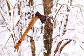 Ax stuck in a tree
