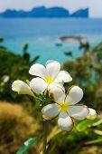 Idyllic Blossom Flower Perspective