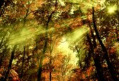 image of serbia  - Shafts of light through forest trees in Belgrade - JPG