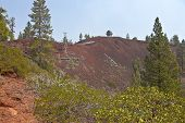 picture of butts  - Lava Butte forest trees and crater near Bend Oregon - JPG