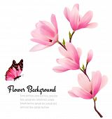 foto of japanese magnolia  - Nature background with blossom branch of pink flowers and butterfly - JPG