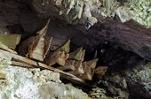 picture of coffin  - Wooden coffins with the body in sepulchral caves in the region Tana Toraja on an island Sulawesi in Indonesia - JPG