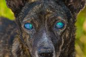 image of venom  - The dog was blind because of cobra venom - JPG