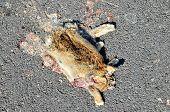 stock photo of mammal  - Dead Animal Mammal on the Asphalt Road - JPG