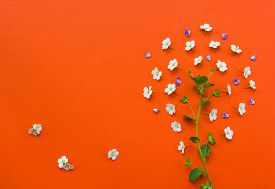 pic of naturist  - Creative tree made from white flowers on orange background - JPG